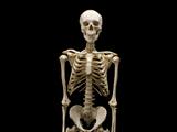 Skelephobia