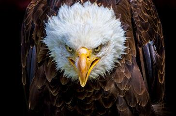 Eagle scout.jpg