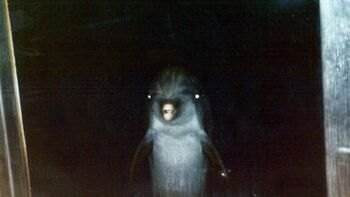 Creepy Dolphin.jpg