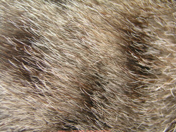 Cat Furs.jpg