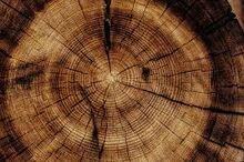 Wood-0.jpeg