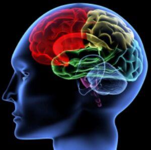 Brain Diseases.jpg