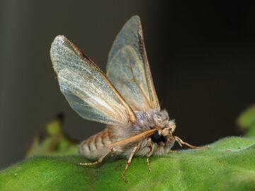 Moths2.jpg