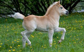 Ponies.jpeg