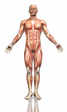 Da human body.png