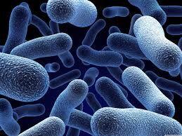 Microorganisms.jpeg