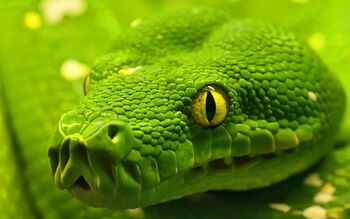 Close-Up-Green-Snake.jpg