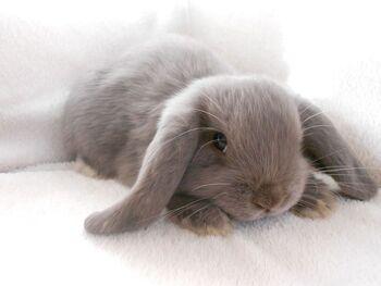 Grey bunnies.jpg