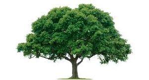 Tree.jpeg