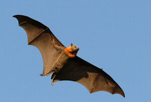 Flying Animal.jpg