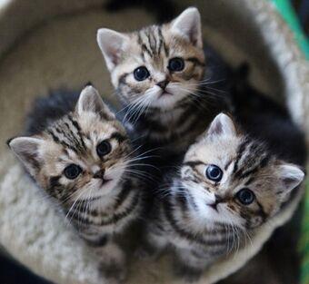 Cute-Three-Kitty.jpg