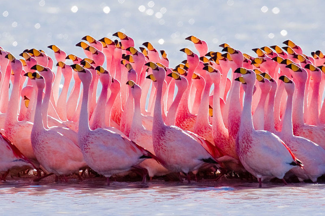 Flamingophobia