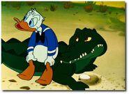 Donald Alligator