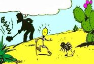 Araignée du désert