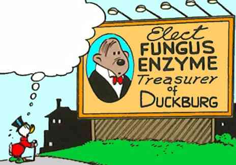 Fungus Enzyme