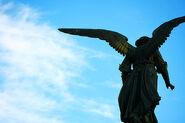 N.Y.C's Angel