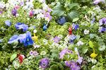 Pikmin 3 Flowers