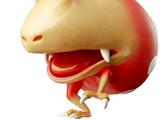 Red Bulborb