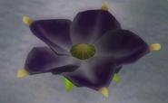 Violet Candypop Bud