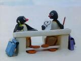Pingu's Admirer