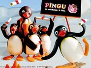 PinguGraduation