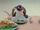 Hello, Pingu