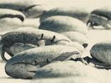 Cangrejos (bodega de Davy Jones)