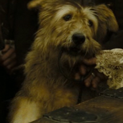 Prison Dog
