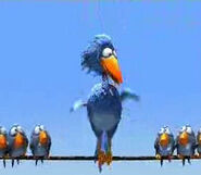 Big bird friends