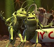 Singing-Grasshoppers