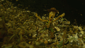 Toystory3atrailer42.png