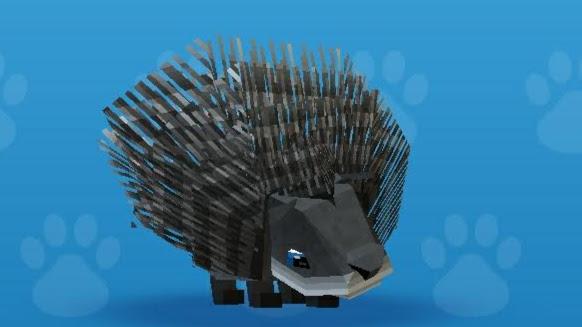 Hedgehog (Pet)