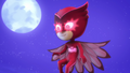 Owl Eyes 04