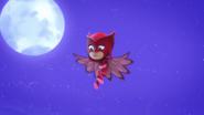Owl Eyes 09
