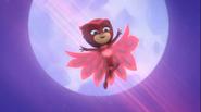 Graceful Owlette