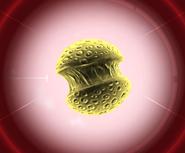 Симианский грипп простой геном