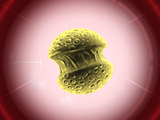 Симианский грипп