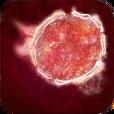 Scenario nipah virus.png