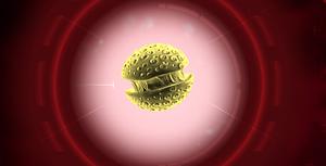PLE - Simian Flu model