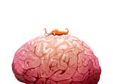 Червь Neurax