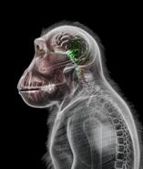 Petridish ape2@2x