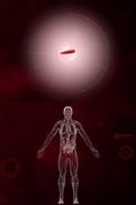 Простой геном паразита