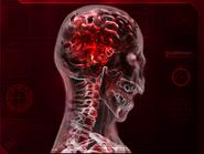 Развитие генома вируса Necroa 6 стадия
