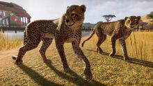 Pz cheetah 1 1920x1080