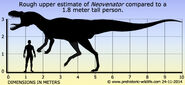 Neovenator-size