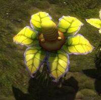 Mini Corn Plant.jpg