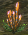 Snake Flower Plant.png