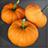 Pumpkin Icon.png