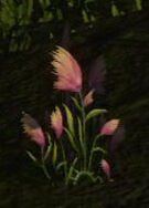 Dandelion Plant.jpg