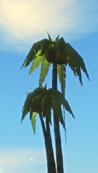 Acai Palm Tree.png